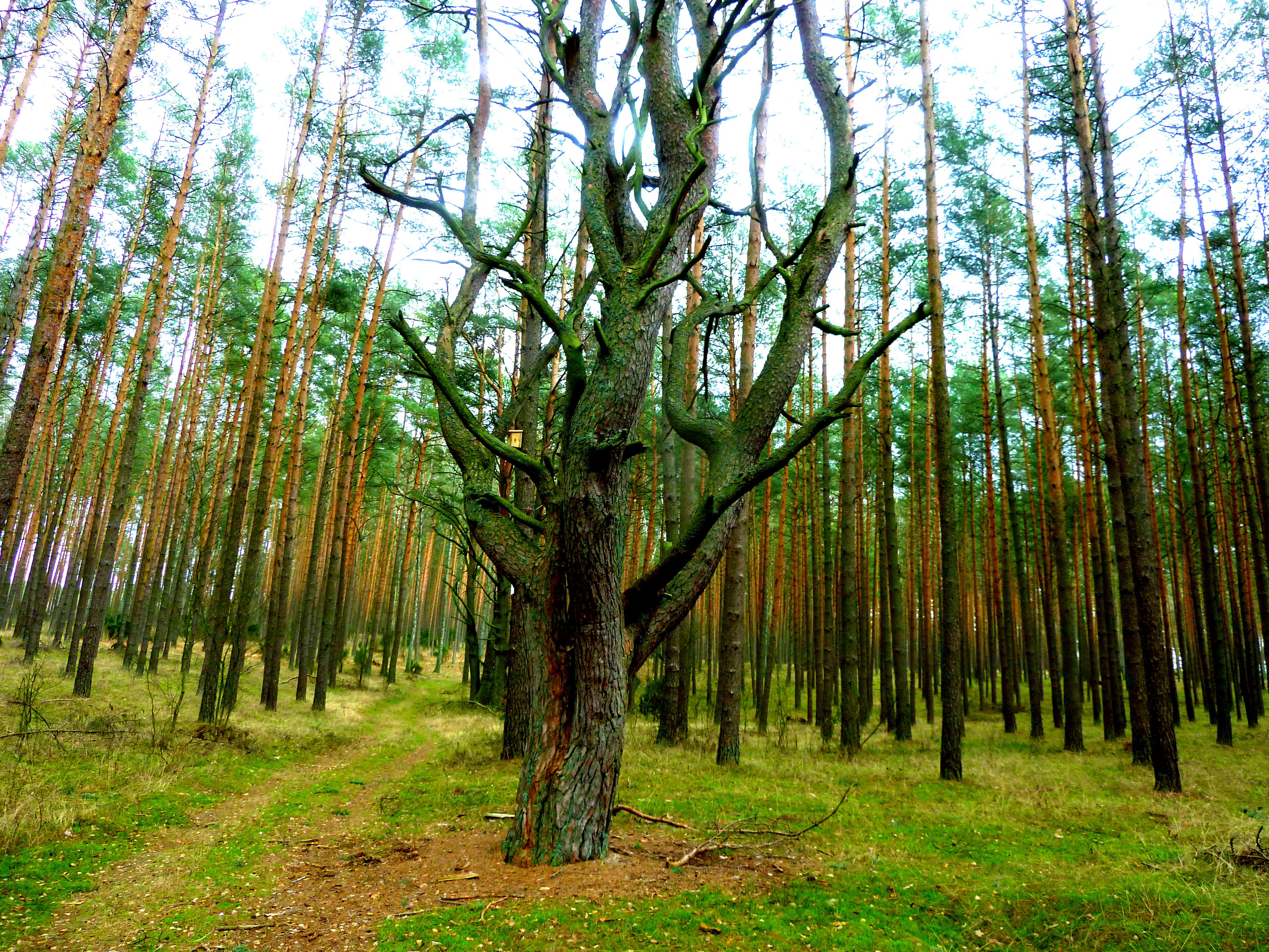 Ośrodek Wypoczynkowo-Rekreacyjny JUBILAT,domki campingowe Bory Tucholskie