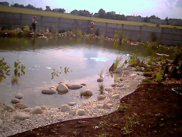Centrum Ogrodnicze NOWROT i Salon psiej urody FRIZZDOG,rośliny wodne śląskie